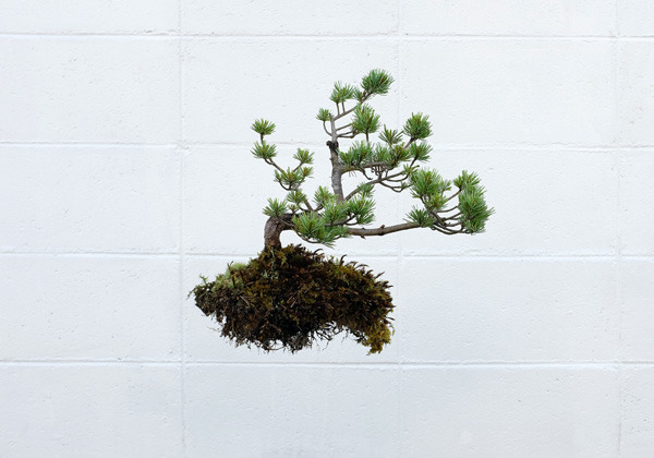 bonsai_01_600.jpg