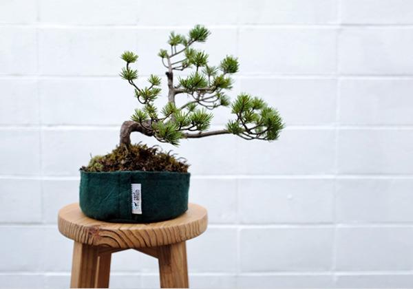 bonsai_02_600.jpg