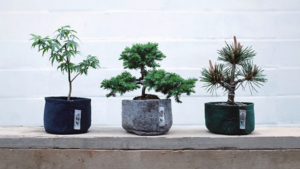 bonsai_600.jpg