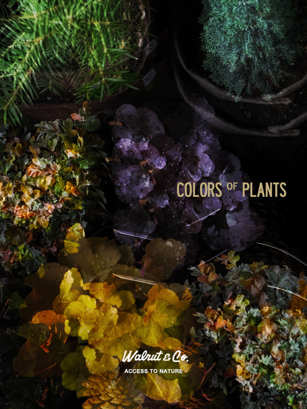 colorsofplants.jpg