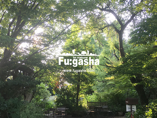 fugasha_001.jpg