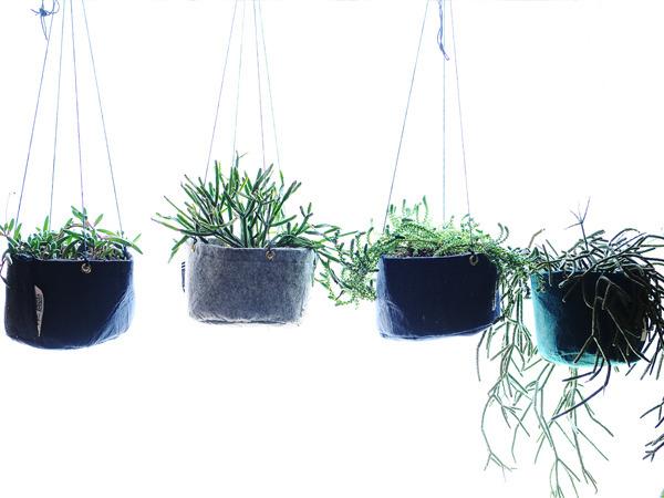 hanging_planter_600.jpg