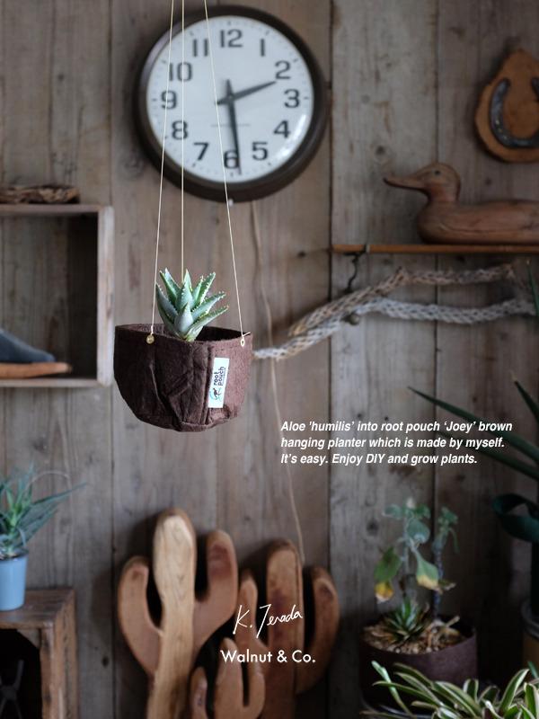 hangingplanter_joey.jpg