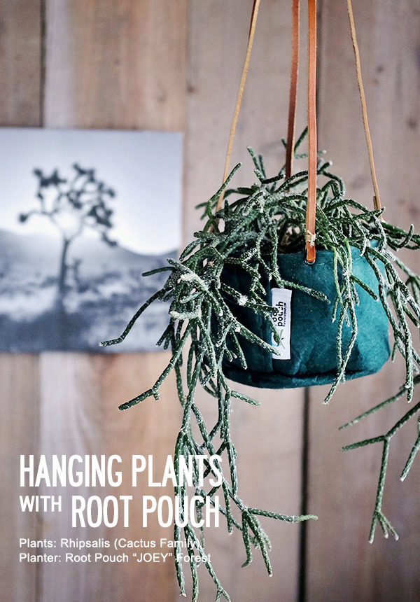 hangingplants.jpg