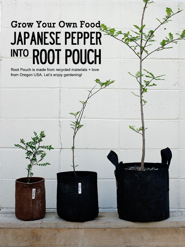 Japanesepepper