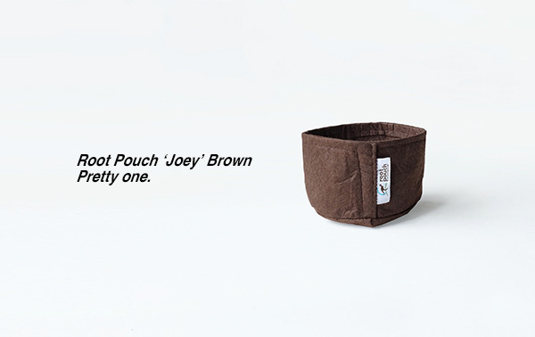 joeybrown.jpg