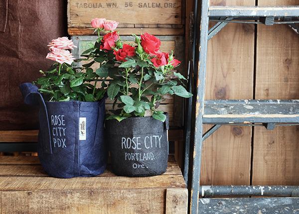 rosecity_600.jpg