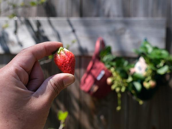 strawberry_02.jpg