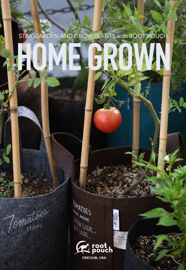 tomato_001.jpg