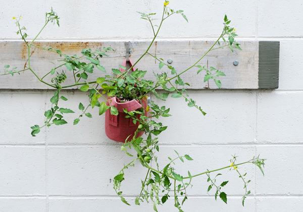 tomato_002.jpg